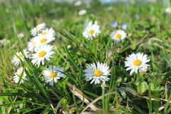 Flower, Plant, Flora, Grass stock photos