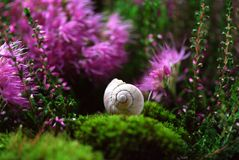Flower, Plant, Flora, Grass stock photography