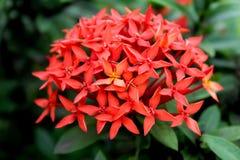 Flower, Plant, Flora, Petal