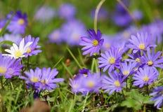 Flower, Plant, Flora, Purple Royalty Free Stock Photography