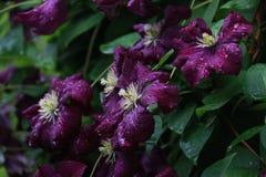 Flower, Plant, Flora, Purple