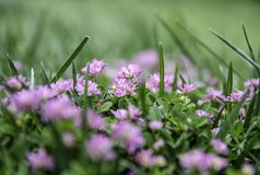 Flower, Plant, Flora, Purple royalty free stock images