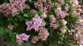 Flower, Plant, Flora, Shrub stock image
