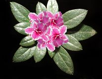 Flower, Plant, Flora, Shrub stock photography