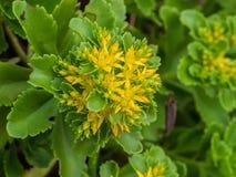 Flower, Plant, Flora, Subshrub stock photo