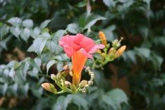 Flower, Plant, Flora, Wildflower