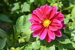 Flower, Plant, Flowering Plant, Annual Plant Stock Photography
