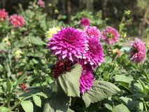 Flower, Plant, Flowering Plant, Annual Plant stock images