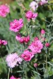 Flower, Plant, Flowering Plant, Annual Plant stock photos