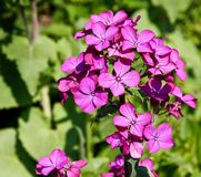 Flower, Plant, Flowering Plant, Annual Plant Royalty Free Stock Photo