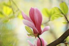 Flower, Plant, Flowering Plant, Blossom stock image