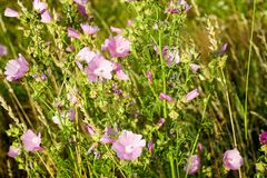Flower, Plant, Flowering Plant, Flora Royalty Free Stock Images