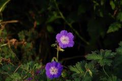 Flower, Plant, Flowering Plant, Flora Stock Photos