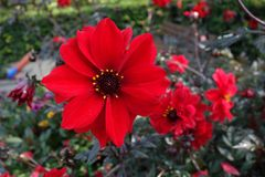 Flower, Plant, Flowering Plant, Flora