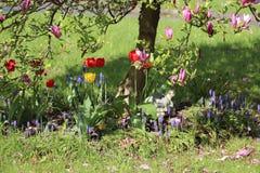 Flower, Plant, Flowering Plant, Flora Stock Images