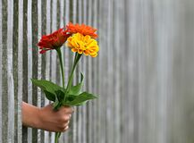 Flower, Plant, Flowering Plant, Flowerpot Stock Photos
