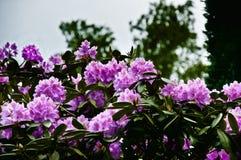 Flower, Plant, Flowering Plant, Pink stock image