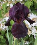 Flower, Plant, Flowering Plant, Purple stock photos