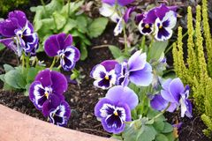 Flower, Plant, Flowering Plant, Purple stock photo