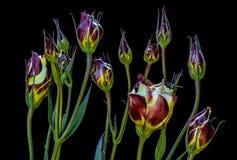 Flower, Plant, Flowering Plant, Purple stock photography