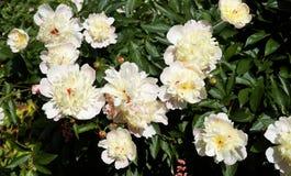 Flower, Plant, Flowering Plant, Rose Family stock photos