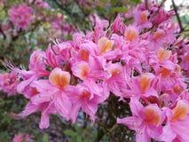 Flower, Plant, Flowering Plant, Woody Plant stock image