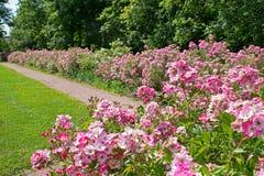 Flower, Plant, Garden, Botanical Garden royalty free stock image