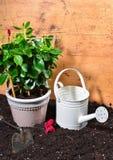 Flower Plant gardener Royalty Free Stock Image