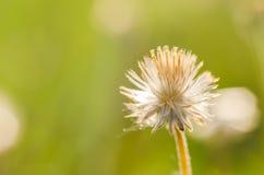 Flower plant grass Stock Photos