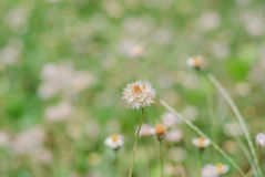 Flower plant grass weed Royalty Free Stock Image