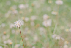Flower plant grass weed Stock Photos