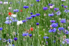 Flower, Plant, Grass, Wildflower stock image