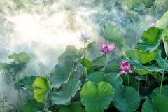 Flower, Plant, Lotus, Sacred Lotus Royalty Free Stock Photos