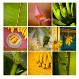 Flower and plant mosaic Royalty Free Stock Photos