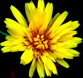 Flower. Plant nature yellow beautiful Stock Photography