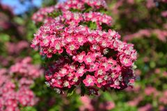 Flower, Plant, Pink, Flowering Plant stock photo
