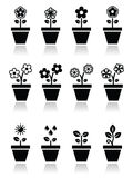 Flower, plant in pot  icons set. Nature icons - one, and two flowers in pot, growing plant with leaves Royalty Free Stock Photo