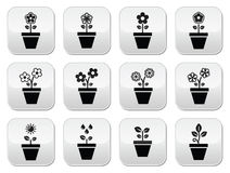Flower, plant in pot  icons set. Nature icons - one, and two flowers in pot, growing plant with leaves Royalty Free Stock Photography