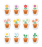 Flower, plant in pot  icons set Stock Photography