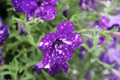 Flower, Plant, Purple, Flora royalty free stock images