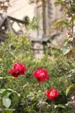Flower, Plant, Rose Family, Flora stock photos
