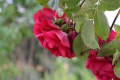 Flower, Plant, Rose Family, Flowering Plant royalty free stock images