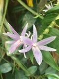 Flower, plant, shrub, tree Royalty Free Stock Image