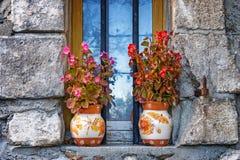 Flower, Plant, Spring, Flowerpot Stock Image