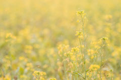Flower plant on summer Stock Photography