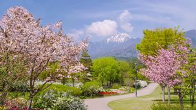 Flower, Plant, Tree, Blossom Royalty Free Stock Image
