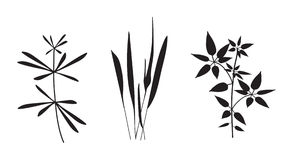 Flower Plant Vector Silhouette. Vector illustration of abstract floral silhouettes Stock Image