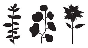 Flower Plant Vector Silhouette. Vector illustration of abstract floral silhouettes Stock Photos