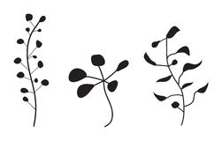 Flower Plant Vector Silhouette. Vector illustration of abstract floral silhouettes Royalty Free Stock Photo