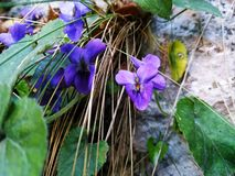 Flower plant violet royalty free stock photography